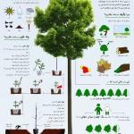 اینفوگرافیکی به مناسبت روز درختکاری